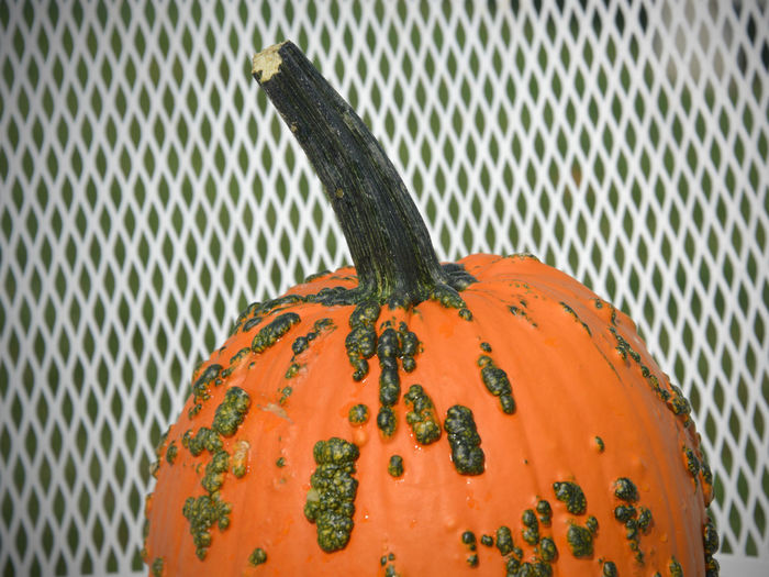 Close-up of orange pumpkin