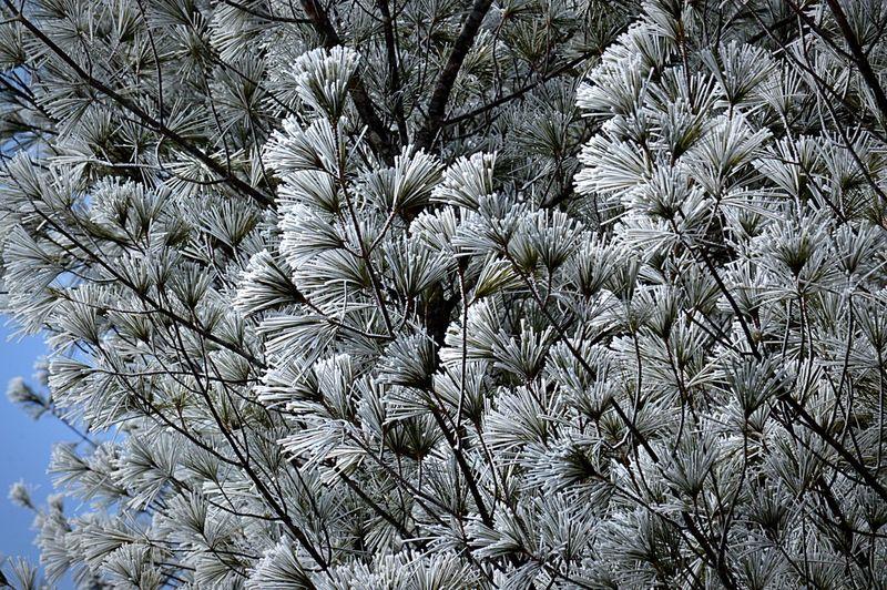 霧氷 北海道 Eyem Best Shot Trees Hugging A Tree Winter Trees Nature EyeEm Nature Lover Nature_collection EyeEm Best Shots - Nature