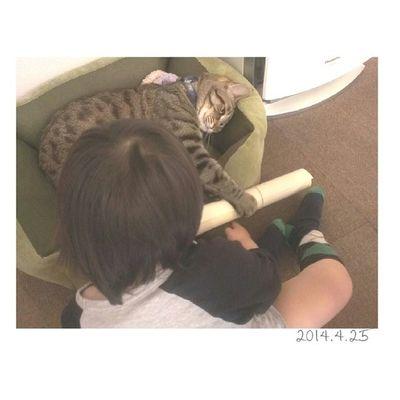 かんたVSきんたろう 息子、オムツ変え後に脱走した為この格好(笑) ∞ 最近棒的な物を見つけると、人(猫も)を叩く息子。 メッ!としかるもまだダメな事がわからないため、笑顔で続行…(дlll)オイオイ ∞ 金太郎、ナイスキャッチにより一件落着(・ω・)-3 息子たち 男の子 1歳11ヶ月 1歳半 親ばか部おやばか猫ネコにゃんこ子供kidsig_kidsig_catかんたVSきんたろうきんたろう圧勝