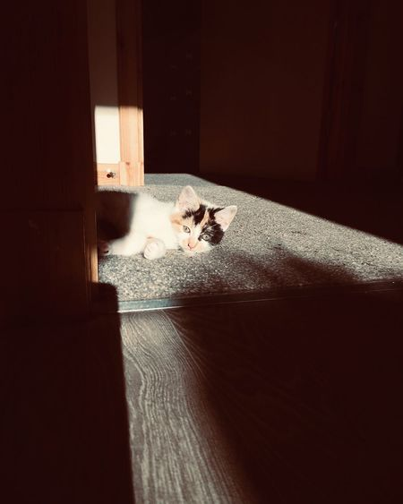 Sunbathing Happy Scottish Highlands Relaxing Warm Bright Kitten Cats Feline Light And Shadow Water Nature Indoors  Sea One Person Motion Real People