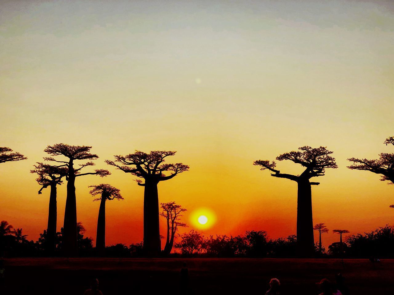 sunset, sky, plant, tree, silhouette, orange color, nature, beauty in nature, sun, street, scenics - nature, palm tree, outdoors, tranquility, street light, tropical climate, growth, no people, tranquil scene, idyllic