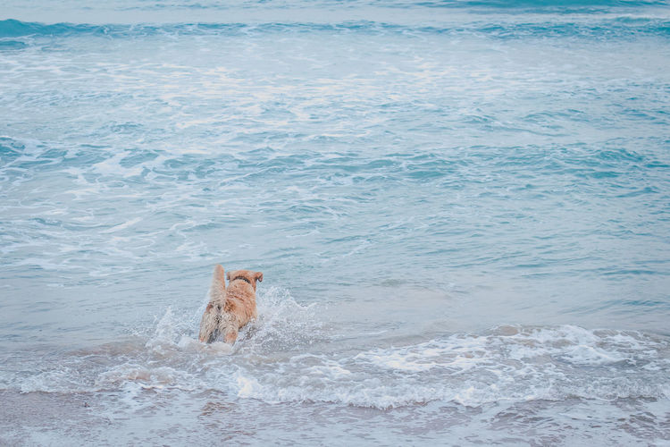 View of dog in the sea