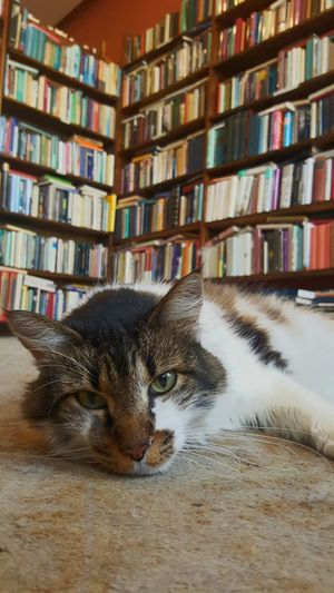Cat Used Bookstore New Orleans