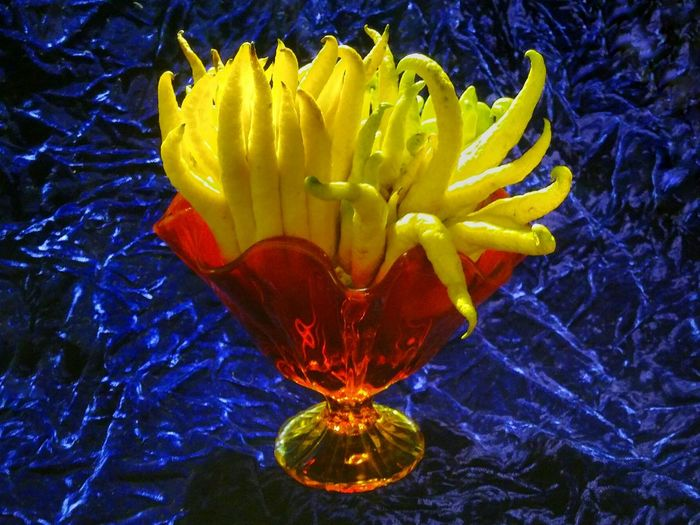 Still Life Citron Buddhashand Citrus Fruit Floral Arrangment Primary Colors Red Yellow Close-up Beauty In Nature Blue Velvet Red Glass  Still Life Photography Fruit Photography Fruit Fruitporn Colorporn Hand Of Buddha Citrus Fruits Citrus  Citrusfruit