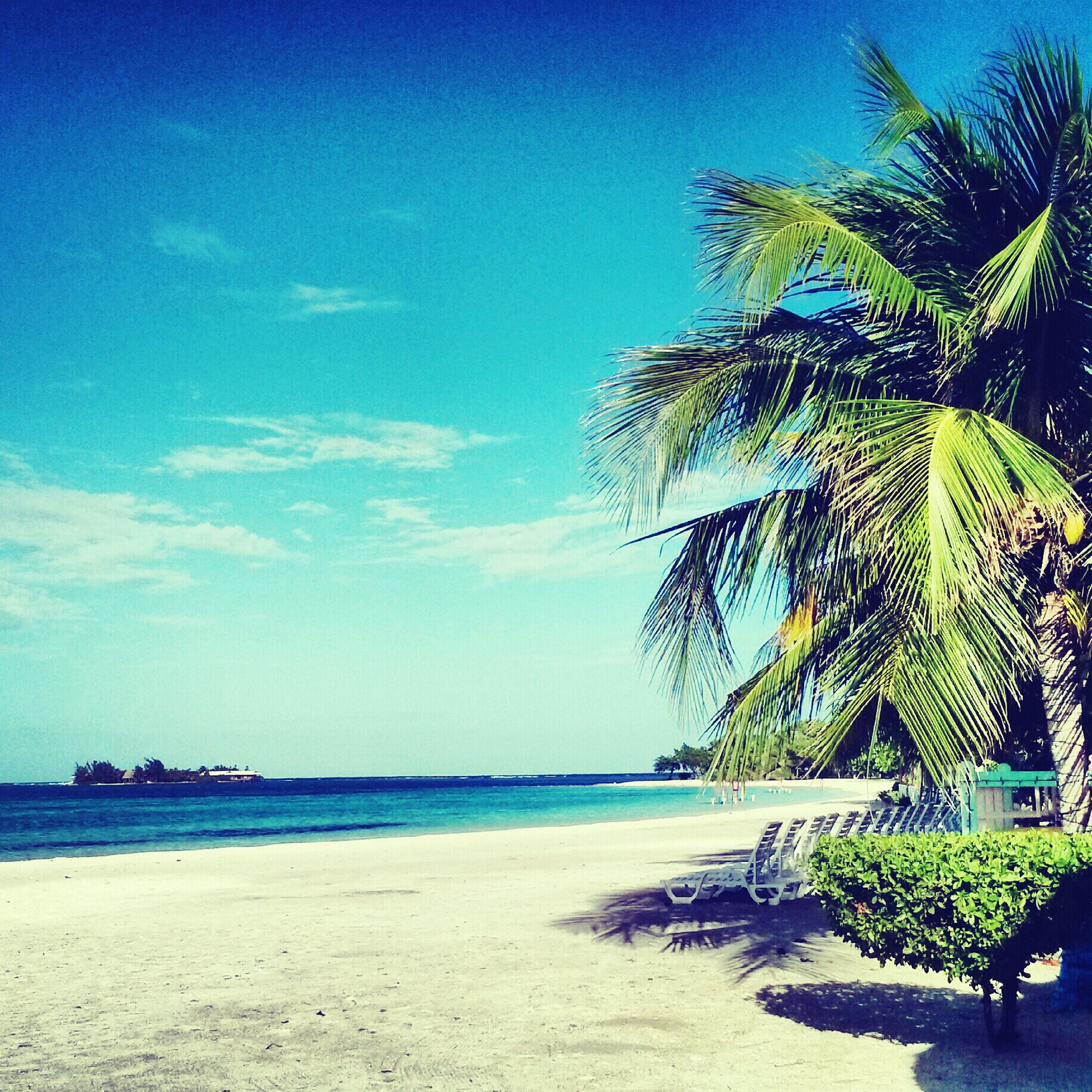 sea, palm tree, beach, water, tree, blue, shore, tranquility, sand, tranquil scene, horizon over water, sky, beauty in nature, scenics, nature, growth, tropical climate, coastline, incidental people, idyllic