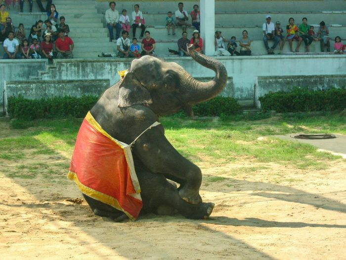 Elephant Mammal One Animal Animal Themes Day Domestic Animals Water Outdoors Statue Spraying No People Animal Trunk