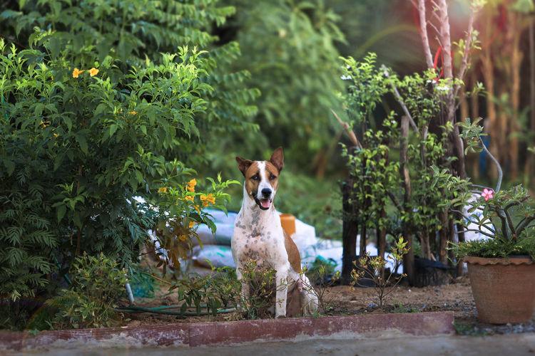 Portrait of a dog against plants
