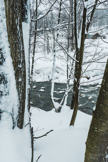 Snow Cold Temperature Winter Tree Trunk Plant Tree Trunk Tranquility Beauty In Nature No People Bare Tree Nature Land Branch Covering White Color Scenics - Nature Tranquil Scene Day Outdoors WoodLand Snowcapped Mountain Snowing Ditch