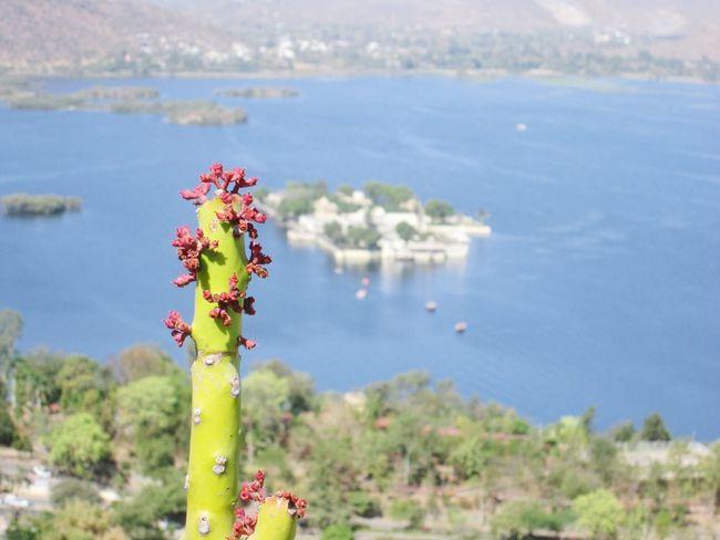 lake picholalake udaipur Jagmandir Cactus Lake KarniMataTemple Nature Flower EyeEm Nature Lover Outdoors Wanderlust Mountain