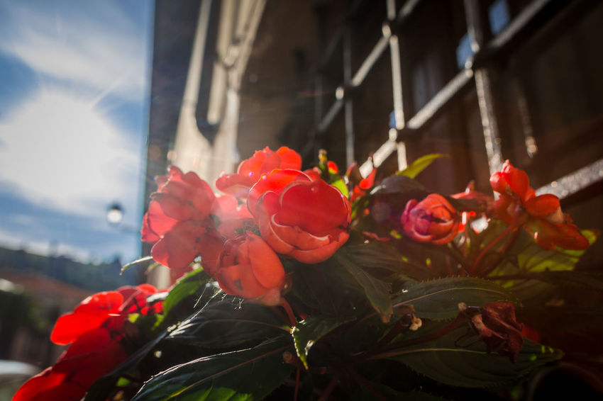 Architecture Beauty In Nature Bouquet Built Structure Bunch Of Flowers Close-up Day Flower Flower Arrangement Flower Head Flowering Plant Fragility Freshness Growth Inflorescence Nature No People Outdoors Petal Plant Red Rosé Vulnerability