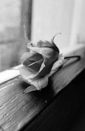 Rose - Flower . Black & White .