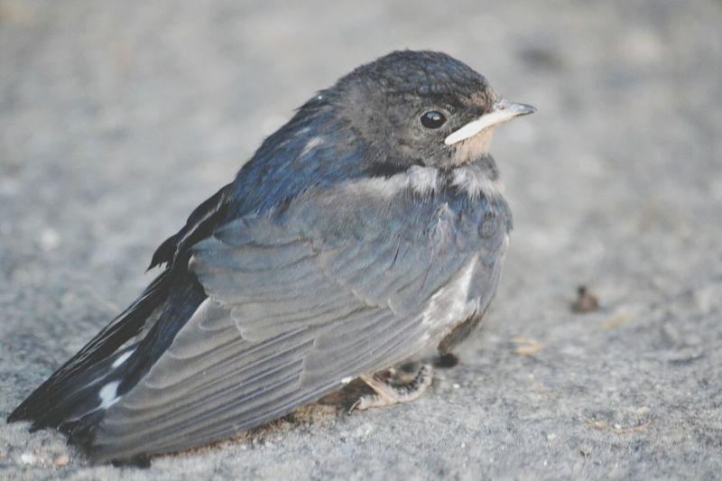 Photo Oiseau