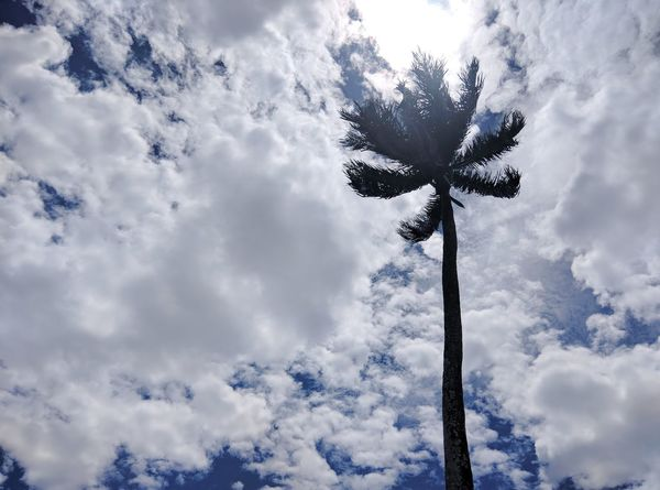 EyeEm Selects Cloud - Sky Tree Low Angle View Sky No People Day Outdoors Nature Nature Countryside Dominican Republic