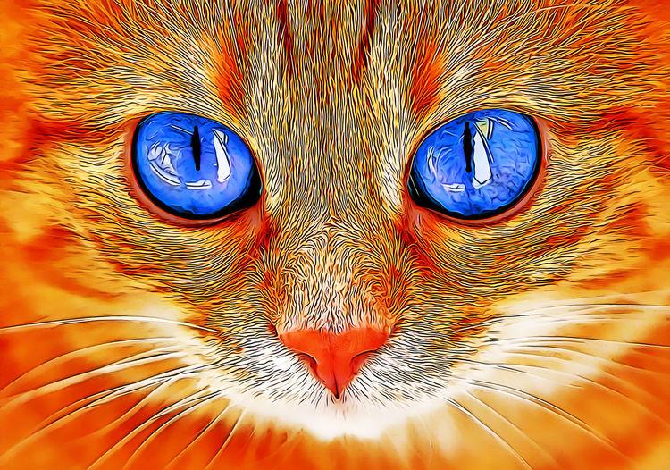 Close-up Animal Animal Themes No People Eye Orange Color Vertebrate Full Frame Backgrounds Mammal Animal Body Part One Animal Cat Blue Animal Eye Representation Feline Art And Craft Pattern Pets Animal Head  Cartoon