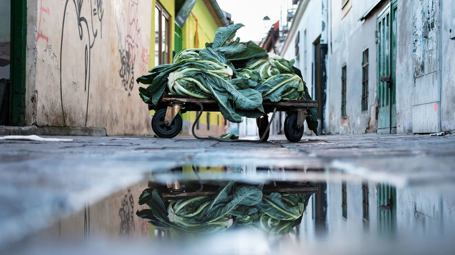 Vegetables on cart by puddle amidst buildings