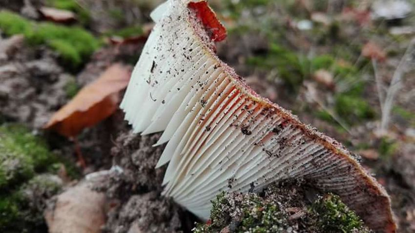 Nature Close-up Moss Outdoors Fungus Leaf Freshness Beauty In Nature Mushrooms 🍄🍄 Mushroom Photography