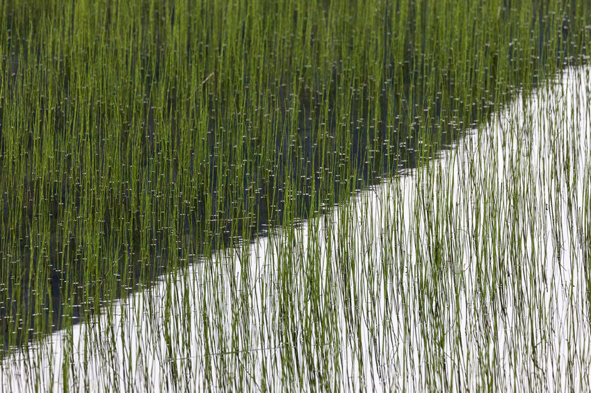 Reflection of a mountain in a grass covered, shallow lake Blade Of Grass Freshness Natural Pattern Tilt Abstract Aquaculture Beauty In Nature Full Frame Grass Grass Family Green Color Growth High Angle View Lake Nature No People Outdoors Pattern Plant Reflection Shallow Standing Water Surface Level Water Waterfront