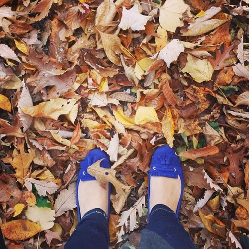 Typical. Autumnleaves Autumngram Dontsteponmabluesuedeshoes Naturewalk