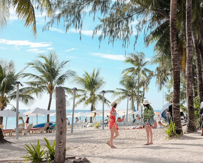 Beach Coconut Palm Tree Day Group Of People Holiday Land Leisure Activity Lifestyles Men Nature Outdoors Palm Tree Plant Real People Sand Sea Sky Sunlight Tree Tropical Climate Water Women