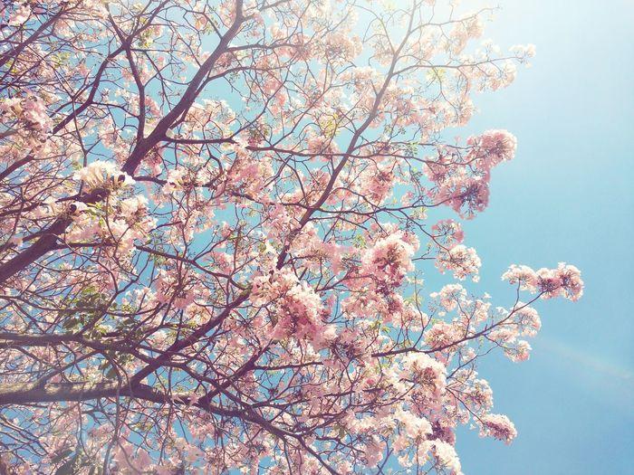 Tree Nature Day