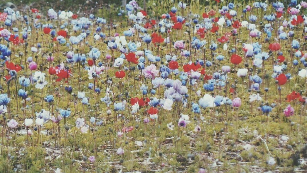 Flowers,Plants & Garden Flowers Flowerporn