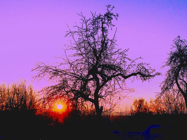 Tree Silhouette Sunset Bare Tree Tranquil Scene No People Nature Beauty In Nature Tranquility Dusk Outdoors Growth Branch Sky Clear Sky Low Angle View Landscape Day