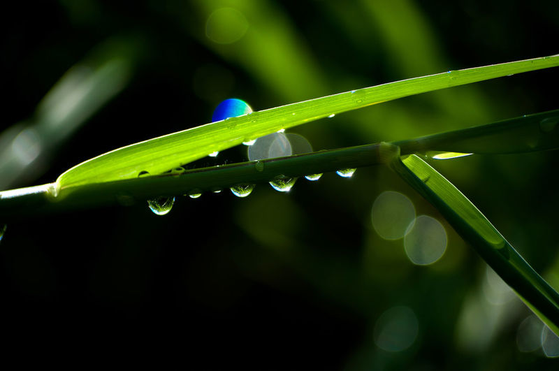 Drop Green