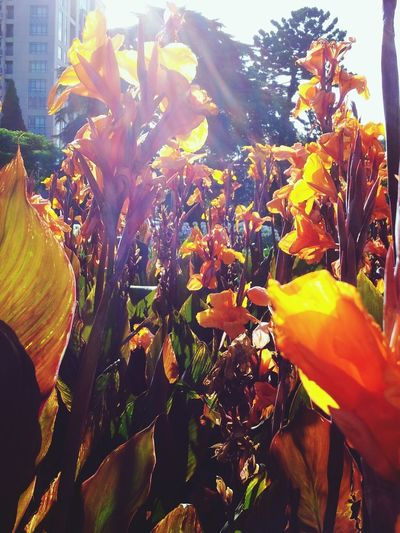 Flowers At Carlton Gardens Leonie Filter