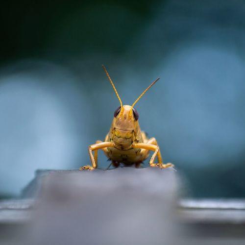 Grasshopper smiles in the park