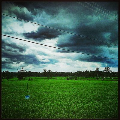 Streetphotography Androgram Landscape WeLoveNature  sky cloud ricefield electricalsky