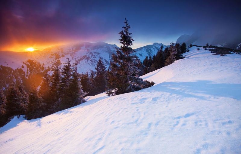 Winter landscapes in a perfect light from Ciucas Mountains, Romania. Beautiful Fairytale  Ice Light Nature Travel Winter Background Blue Cold Colorful Forest Landscape Mountain Mountain Range Outdoor Pine Tree Sky Snow Sun Sunset Tranquility Tree Vacation White