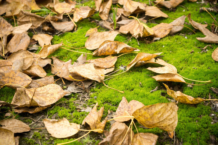 Autumn Beauty In Nature Change Close-up Day Dried Dry Fall Falling Field Fragility Grass High Angle View Land Leaf Leaves Maple Leaf Natural Condition Nature No People Outdoors Plant Plant Part Stick - Plant Part Vulnerability