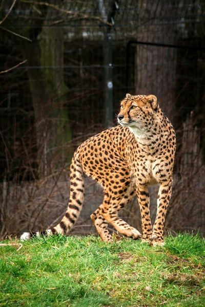 Half Term Visit to Chester Zoo Animal_collection Caturday Photography Photooftheday Eye4photography  Cat Lovers Taking Photos EyeEm Best Shots EyeEm Best Edits EyeEm Animal Lover