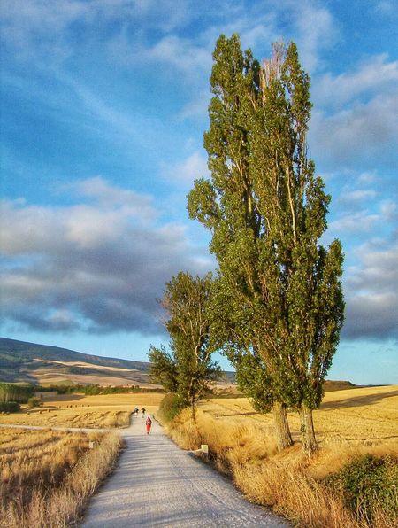 Camino De Santiago Pilgrims Tourist Activity Way Of Saint James The Way Natural Beauty . Navarra 43 Golden Moments