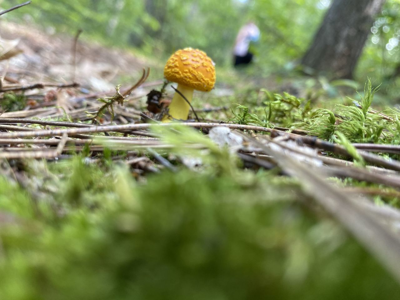 CLOSE-UP OF MUSHROOMS GROWING ON LAND IN FOREST