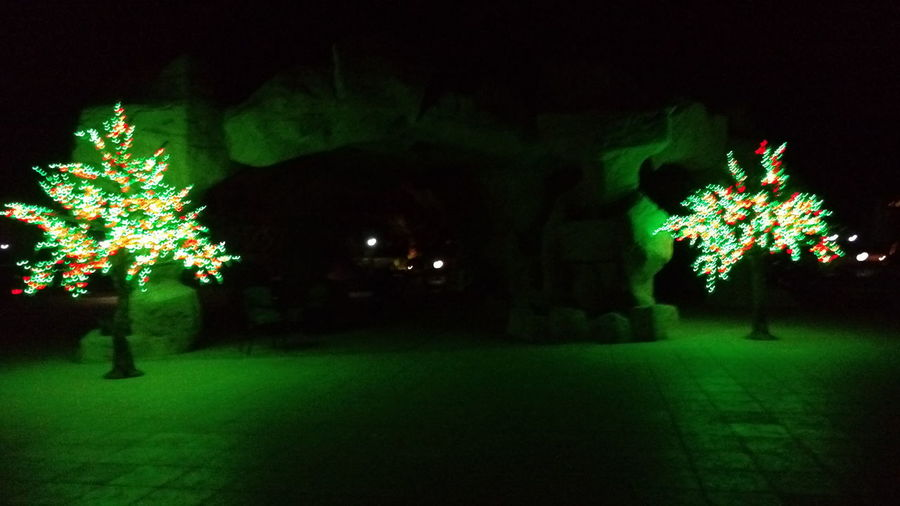 Light In The Darkness Night Lights Pretend Pretend Tree Darkness And Light Tree Lights Night Photography Night Marsa Alam Egypt