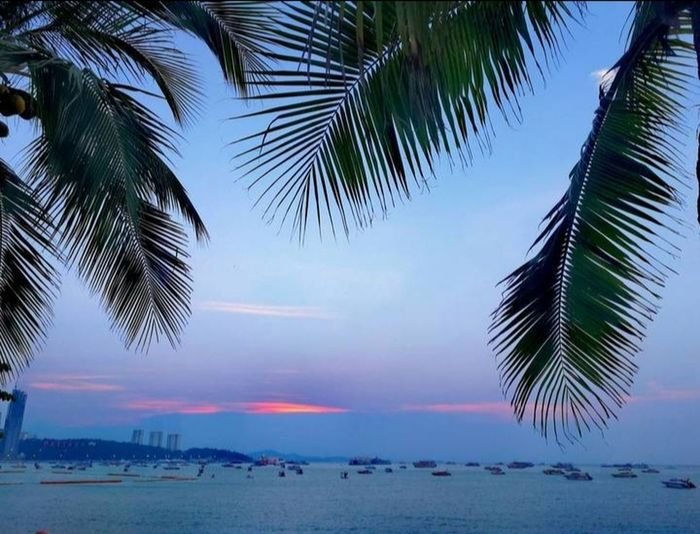 Plame tree Coconut Palm Tree Sea Sunset Sunlight Cloud - Sky Outdoors Nopeople Sky No People Outdoors Green Color Natrue Sky_collection Beauty In Nature EyeEm Best Shots EyeEmNewHere Eye4photography  Thailand🇹🇭 Beautiful Tree City Water Palm Tree Sea Beach Sunset Blue Summer Sky