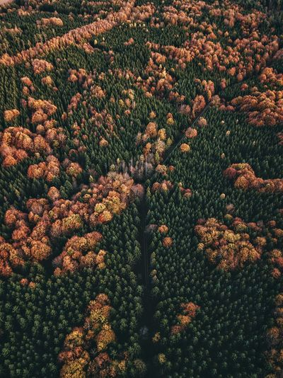 Golden fall Nature Tree Sky Drone  Dronephotography Droneshot Drone Photography Germanroamers SkyPics Fall Fall Beauty Autumn Autumn Colors Autumn🍁🍁🍁 Forest Forest Photography Birdseyeview Birds Eye View
