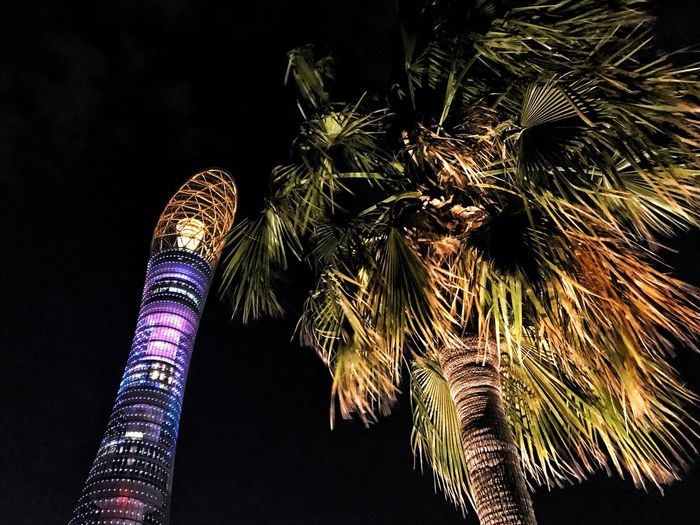 Palm Tree Low Angle View Tree Tower Illuminated Outdoors No People Building Exterior Architecture Doha Torch Tower Aspire Zone
