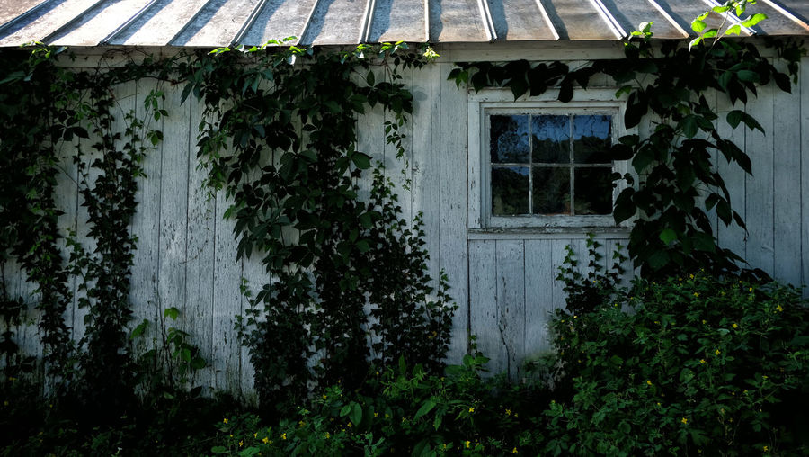 Barn shed Barn Abandoned Architecture Building Building Exterior Built Structure Creeper Plant Damaged Day Green Color Growth House Ivy Nature No People Outdoors Plant Residential District Roof Tree Window