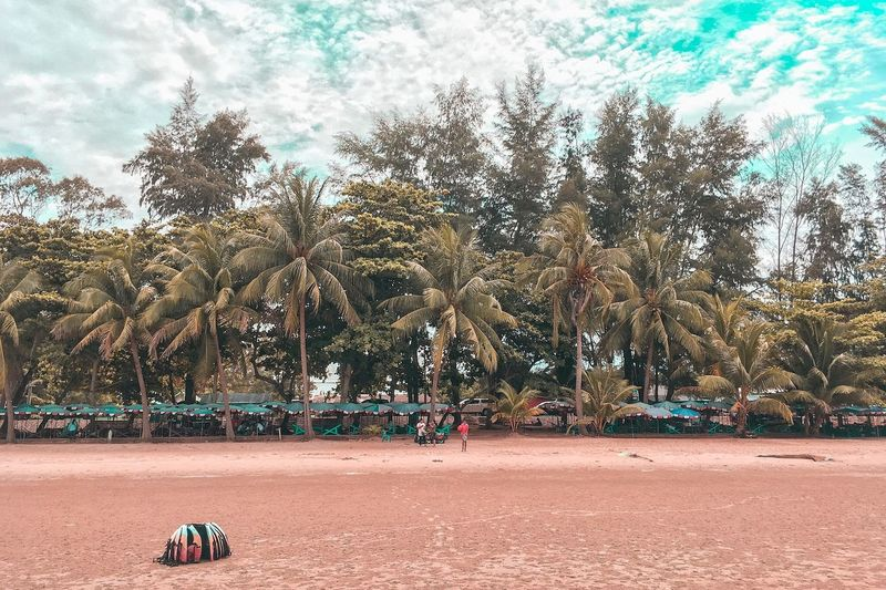 Talay Tree Plant Beach Sand Beauty In Nature Sunlight Outdoors