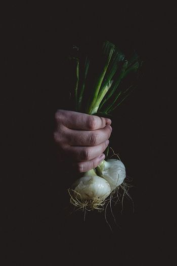 EyeEmNewHere Human Hand Human Body Part Holding Vegetable Flower Bunch Studio Shot One Person Freshness Food Close-up Indoors  Adult Flower Head Bouquet People The Minimalist - 2019 EyeEm Awards