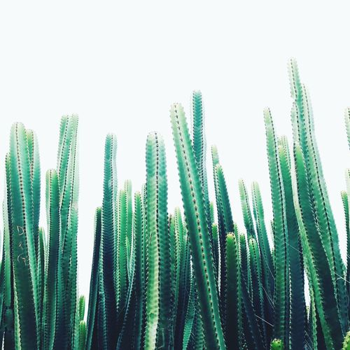 Growth Green Color Nature Plant Leaf Beauty In Nature Outdoors Day No People Close-up Freshness Sky Cactus Flower Puerto Rico