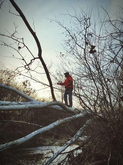 Fallen tree,
