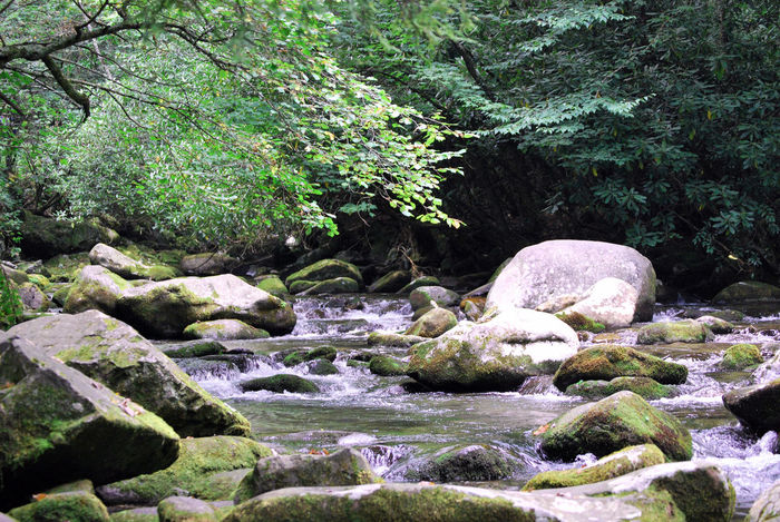 River flowing through the tranquil forest. Brooke Bubbling Bubbling Brook Country Life Outdoors Peace River River, Stream, Waterfall, Spray, Water, Cold, Hands, Like, In, Clean, Wash, Is, Creek, Mountain, Glass Rocks Stream Taking Photos