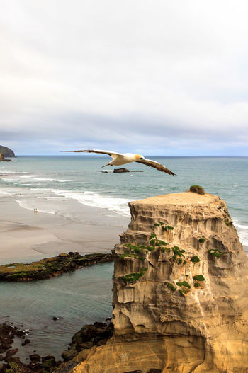 Seagull in flight on near the ocean Animal Animal Themes Animal Wildlife Animals In The Wild At The Edge Of Beach Bird Horizon Horizon Over Water Land Nature No People One Animal Rock Rock - Object Scenics - Nature Sea Seagull Sky Solid Vertebrate Water