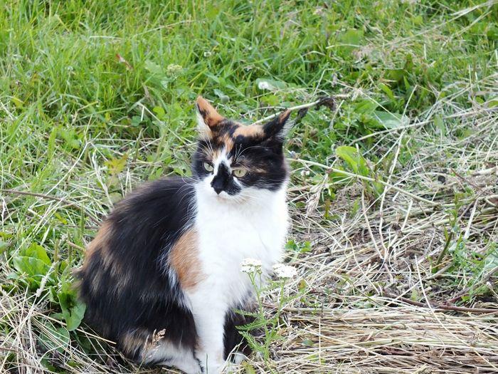 Кошка которая гуляет сама по себе хорошее настроение  деревня вечер лето2017 улица природа и красота First Eyeem Photo
