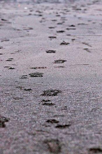 Footprints Sandy Beach Walking Alone...