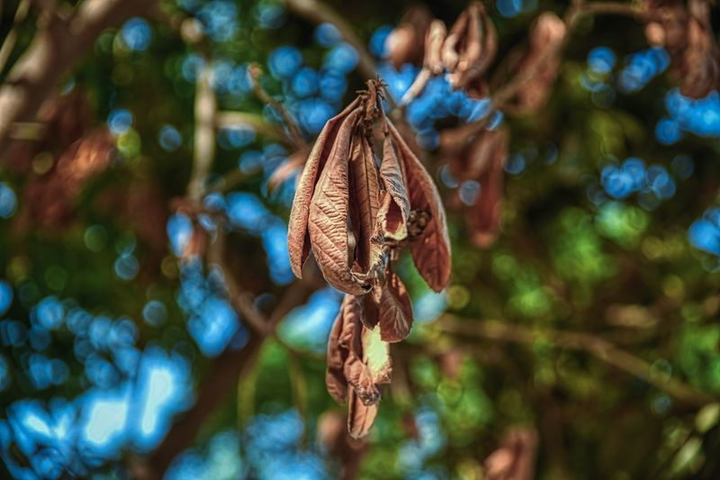 Plant Close-up No People Focus On Foreground Tree Day Plant Part Nature Leaf Hanging Selective Focus Beauty In Nature Growth Branch Tranquility Sunlight Dry Leaves Outdoors