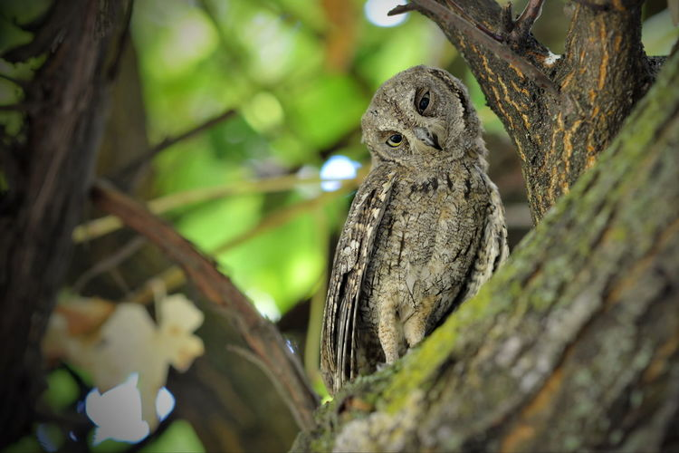 Close-up of a owl bird on tree